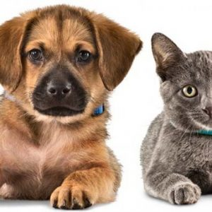 Pet Care
